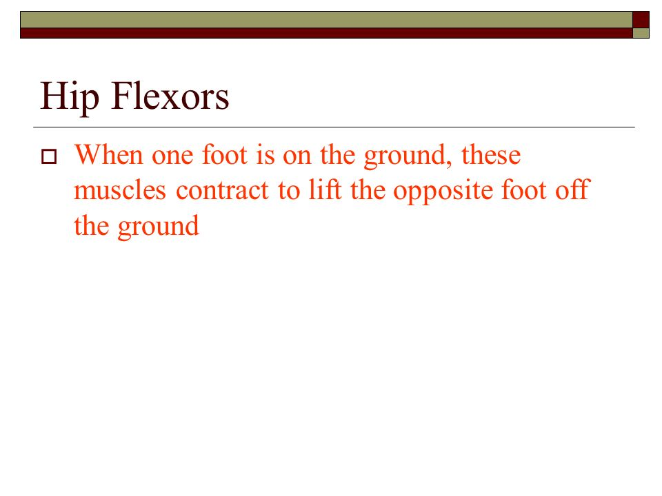 Hip FlexorsWhen one foot is on the ground, these muscles contract to lift the opposite foot off the ground.