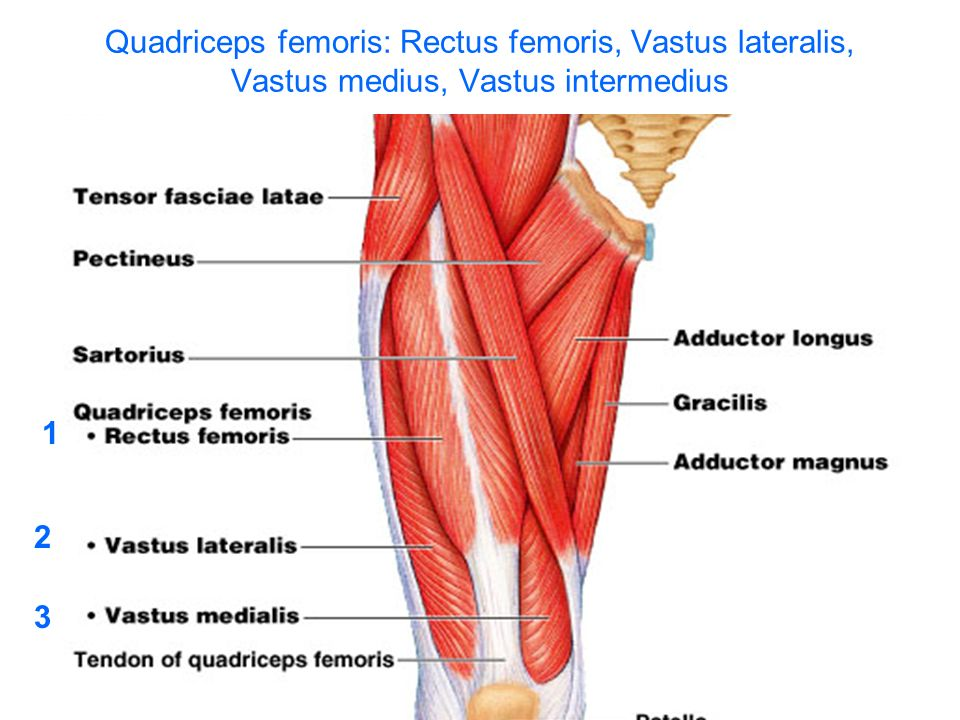 MUSCLES FOR LECTURE. - ppt video online download