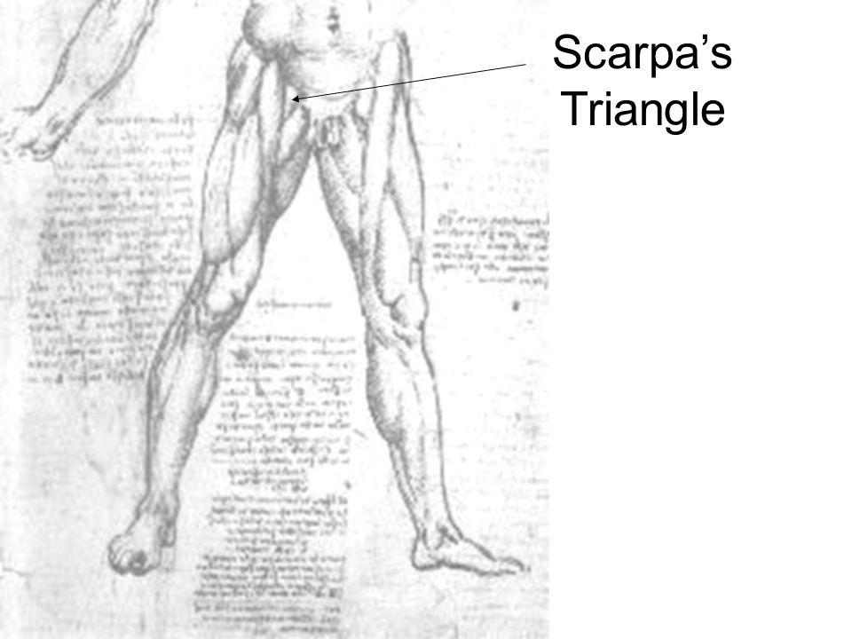 Scarpa's Triangle
