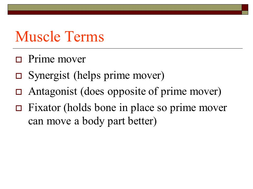 Muscle Terms Prime mover Synergist (helps prime mover)