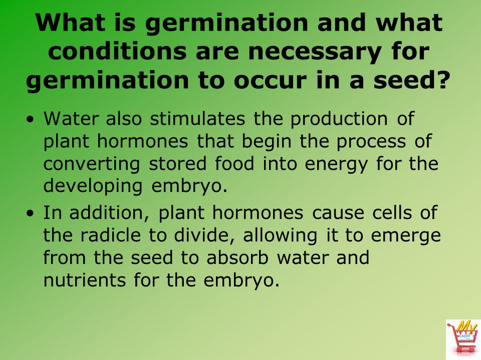What is germination and what conditions are necessary for germination to occur in a seed