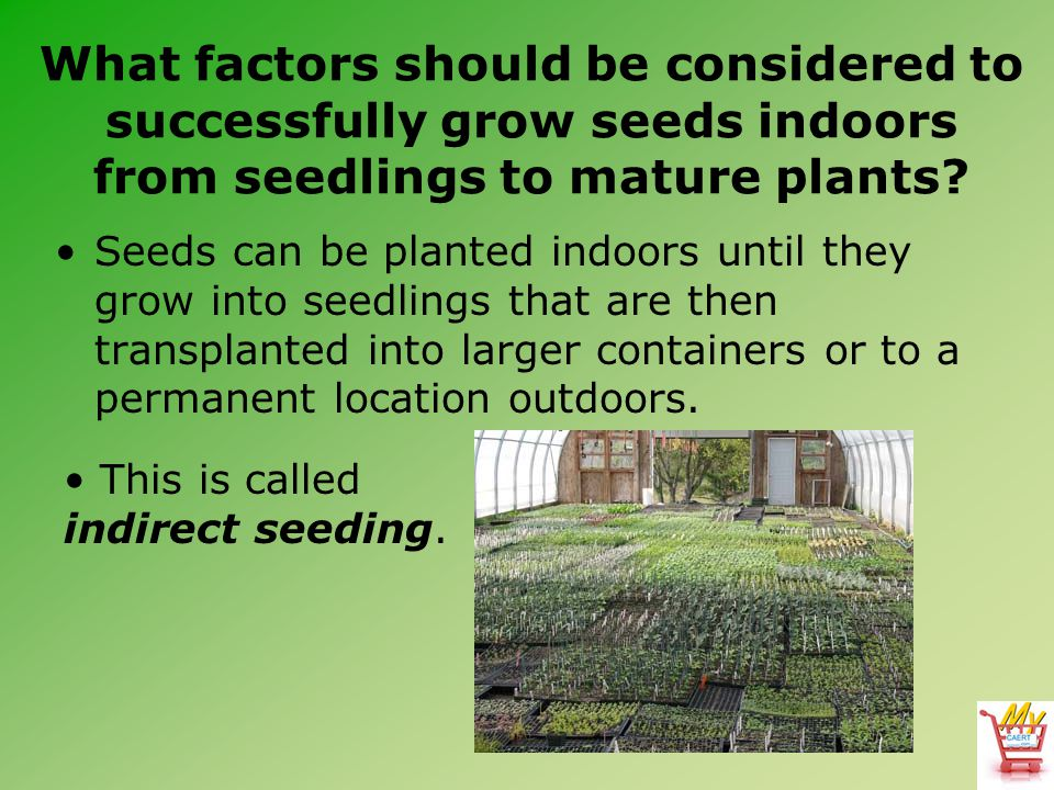 What factors should be considered to successfully grow seeds indoors from seedlings to mature plants
