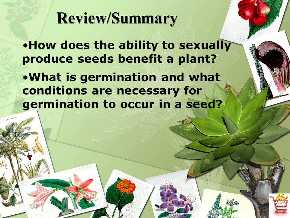 Review/Summary How does the ability to sexually produce seeds benefit a plant