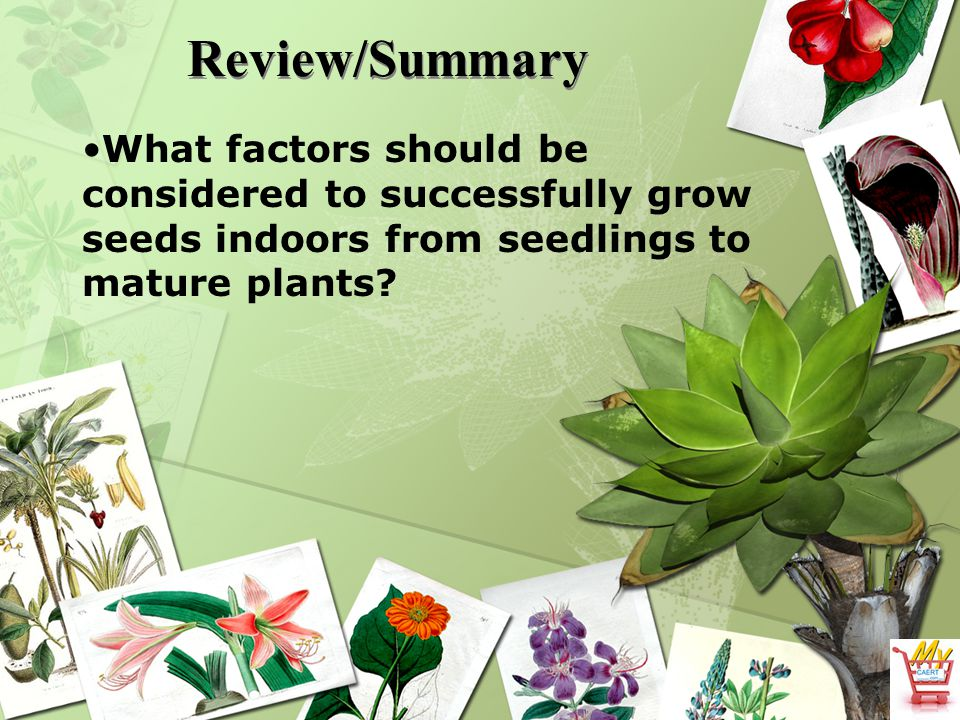 Review/Summary What factors should be considered to successfully grow seeds indoors from seedlings to mature plants