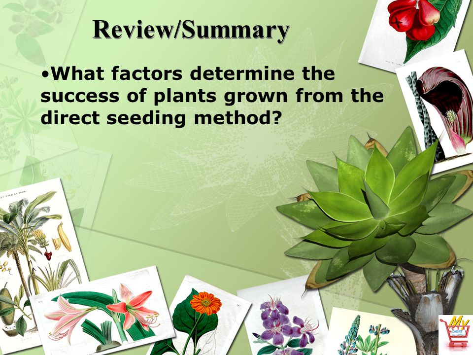 Review/Summary What factors determine the success of plants grown from the direct seeding method