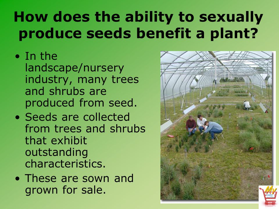 How does the ability to sexually produce seeds benefit a plant