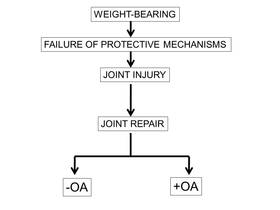 -OA +OA WEIGHT-BEARING FAILURE OF PROTECTIVE MECHANISMS JOINT INJURY