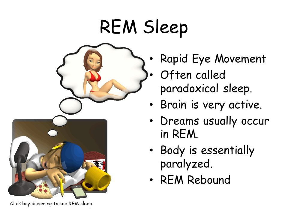 REM Sleep Rapid Eye Movement Often called paradoxical sleep.