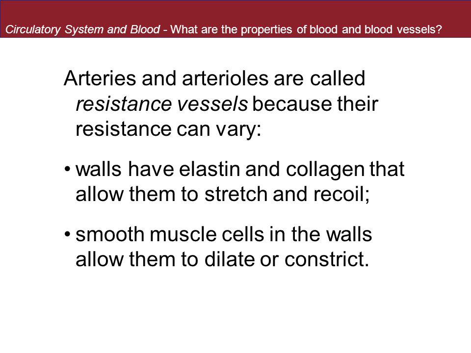 walls have elastin and collagen that allow them to stretch and recoil;