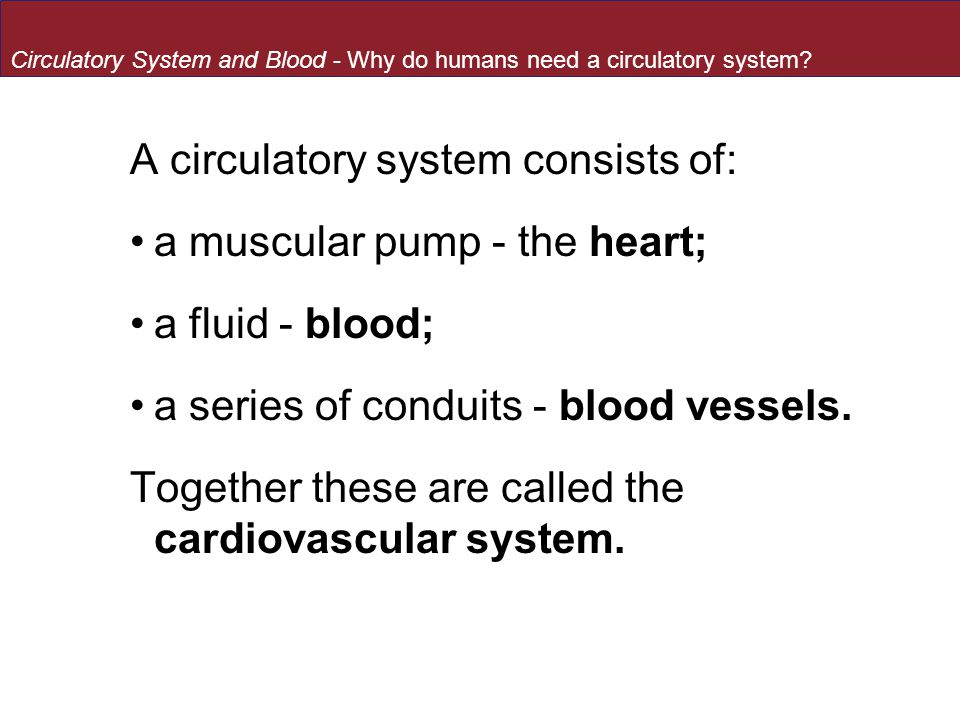 A circulatory system consists of: a muscular pump - the heart;