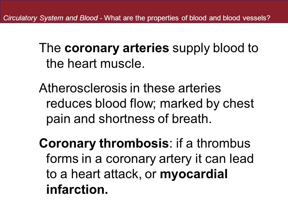 The coronary arteries supply blood to the heart muscle.