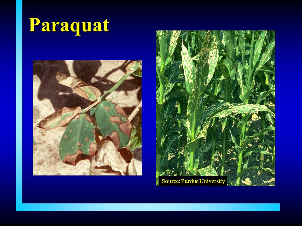 Paraquat Source: Purdue University