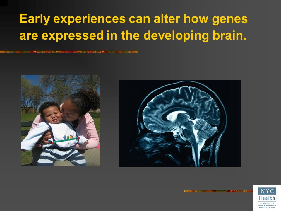 Early experiences can alter how genes are expressed in the developing brain.