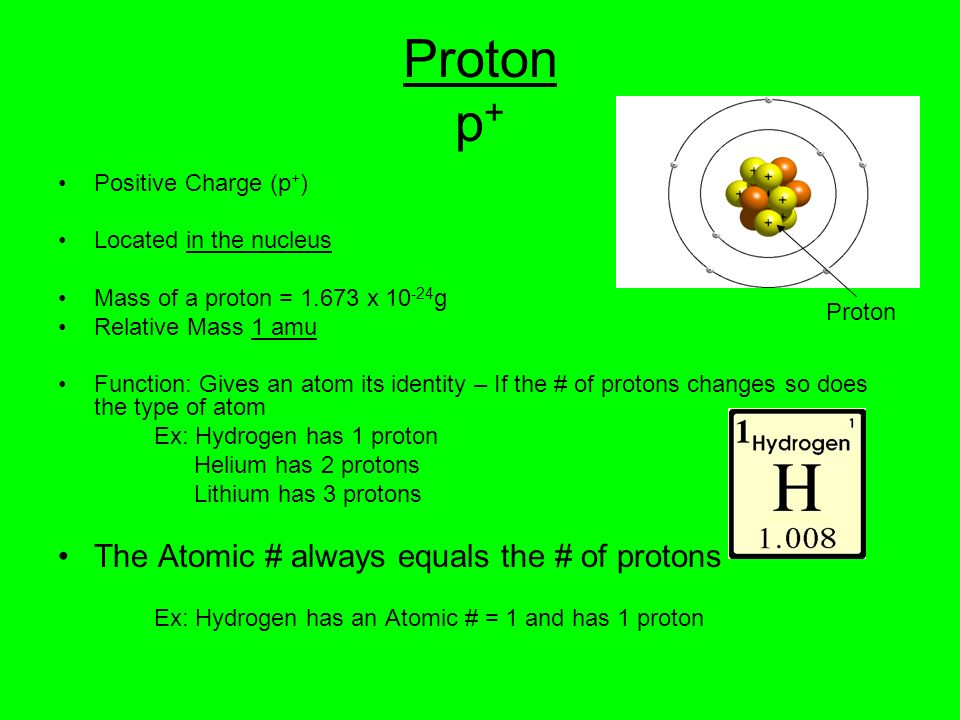 Proton p+ The Atomic # always equals the # of protons