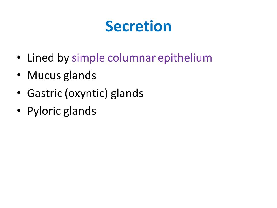 Secretion Lined by simple columnar epithelium Mucus glands