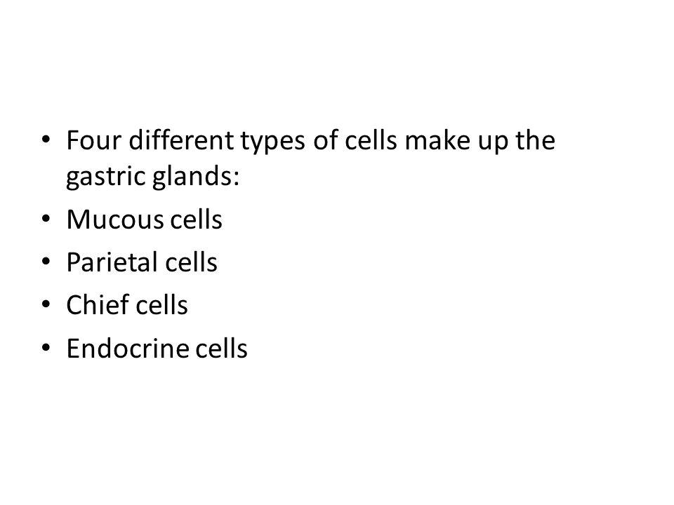 Four different types of cells make up the gastric glands: