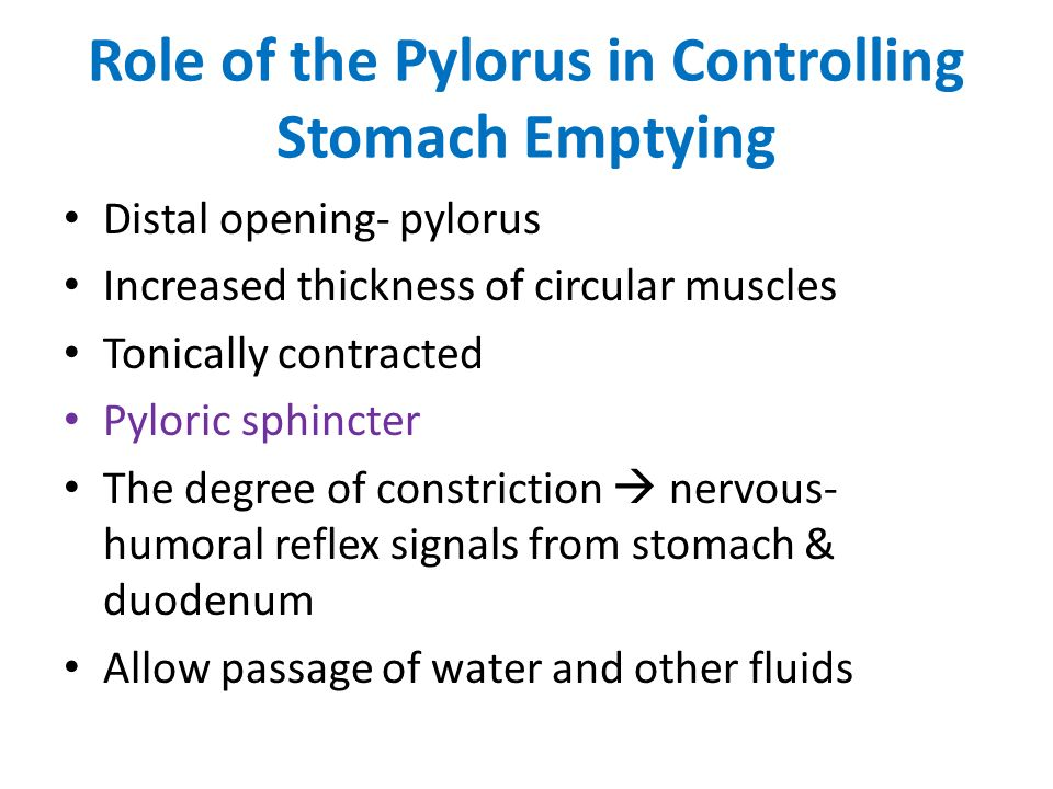 Role of the Pylorus in Controlling Stomach Emptying