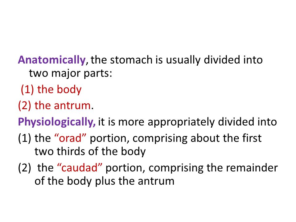 Anatomically, the stomach is usually divided into two major parts: