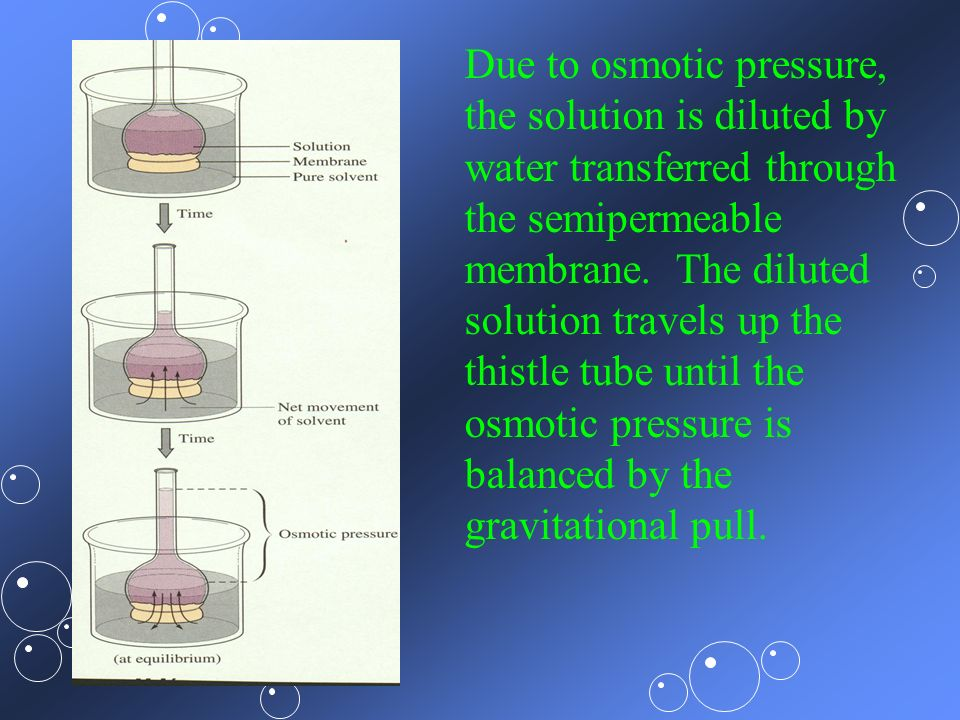 Due to osmotic pressure,