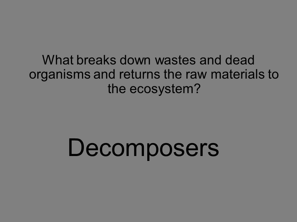 What breaks down wastes and dead organisms and returns the raw materials to the ecosystem