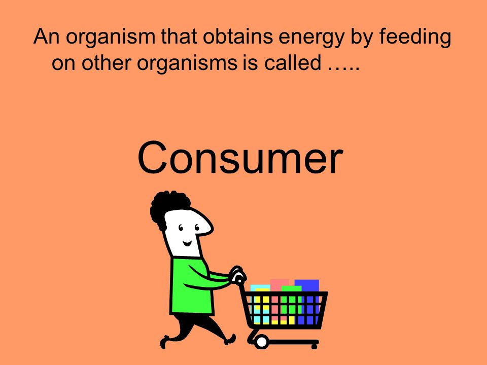 An organism that obtains energy by feeding on other organisms is called …..