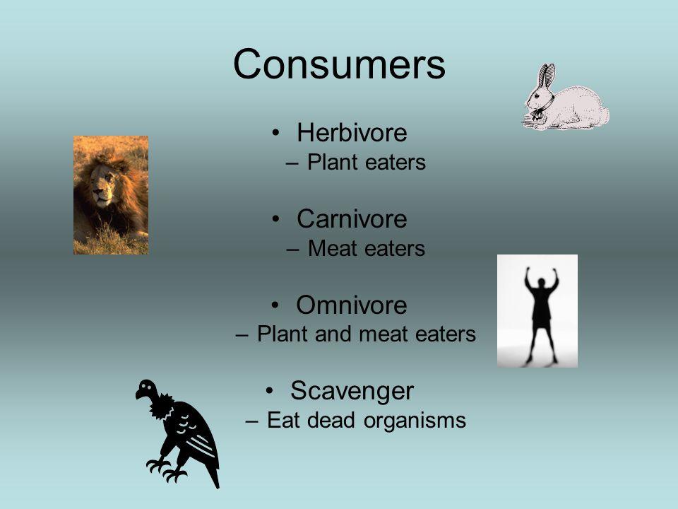 Consumers Herbivore Carnivore Omnivore Scavenger Plant eaters