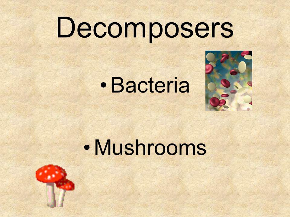 Decomposers Bacteria Mushrooms
