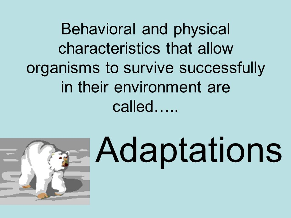 Behavioral and physical characteristics that allow organisms to survive successfully in their environment are called…..