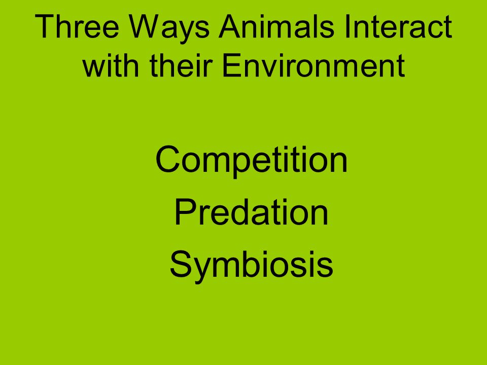 Three Ways Animals Interact with their Environment