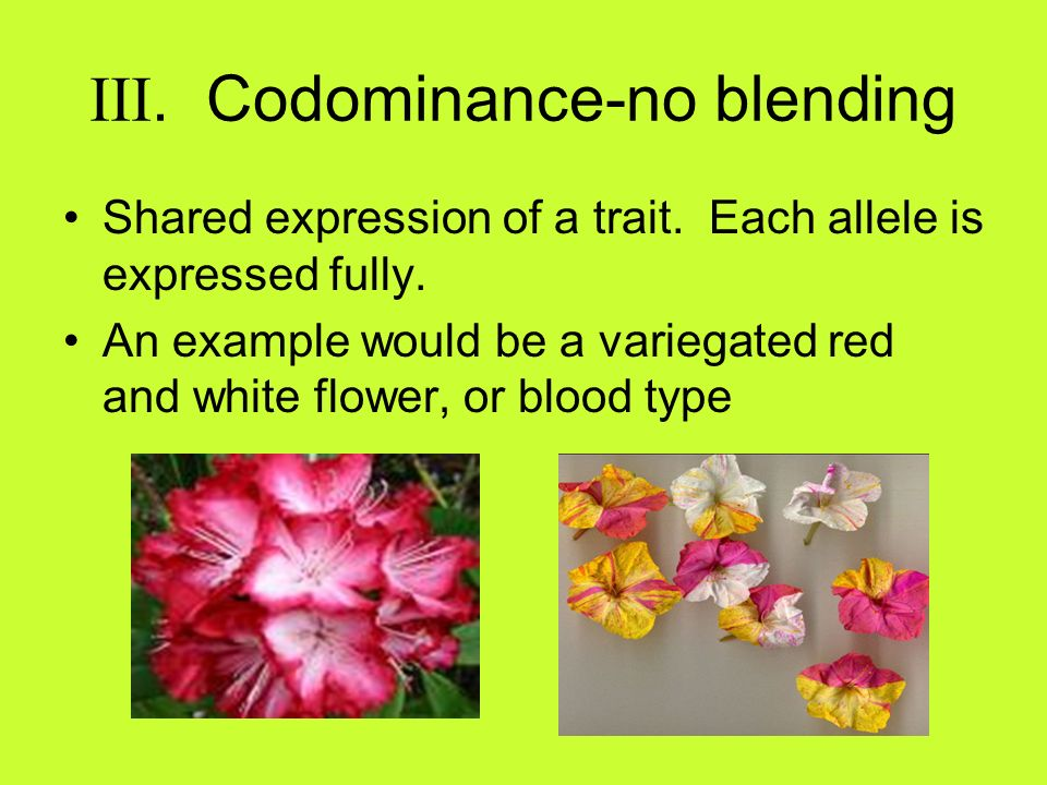 III. Codominance-no blending