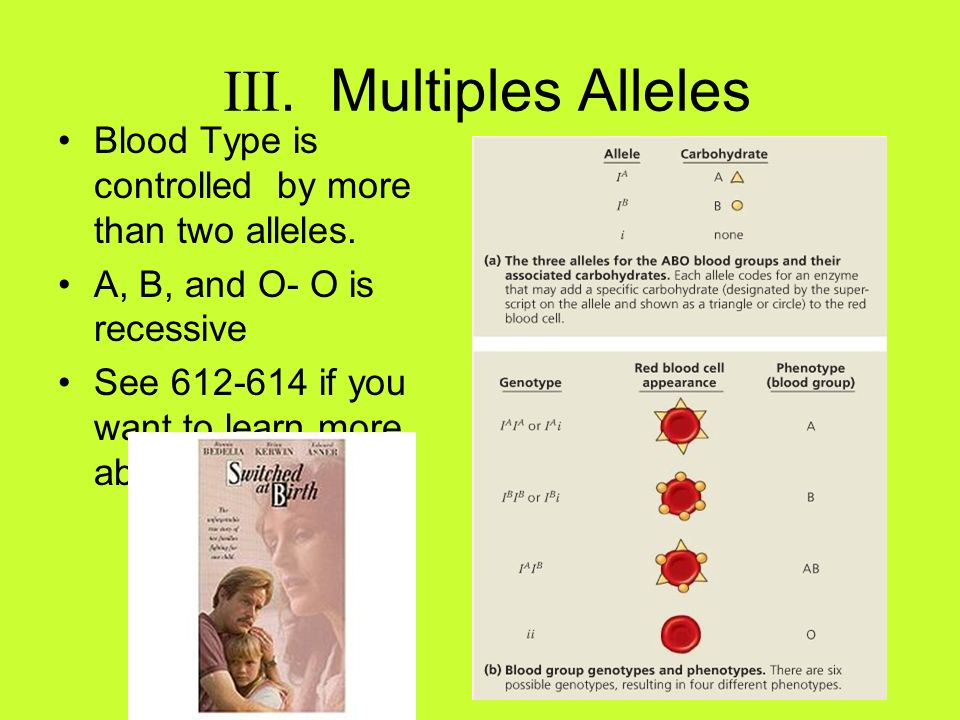III. Multiples AllelesBlood Type is controlled by more than two alleles. A, B, and O- O is recessive.