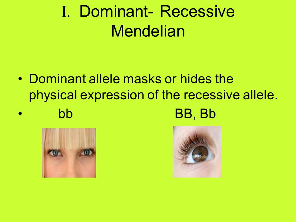 I. Dominant- Recessive Mendelian
