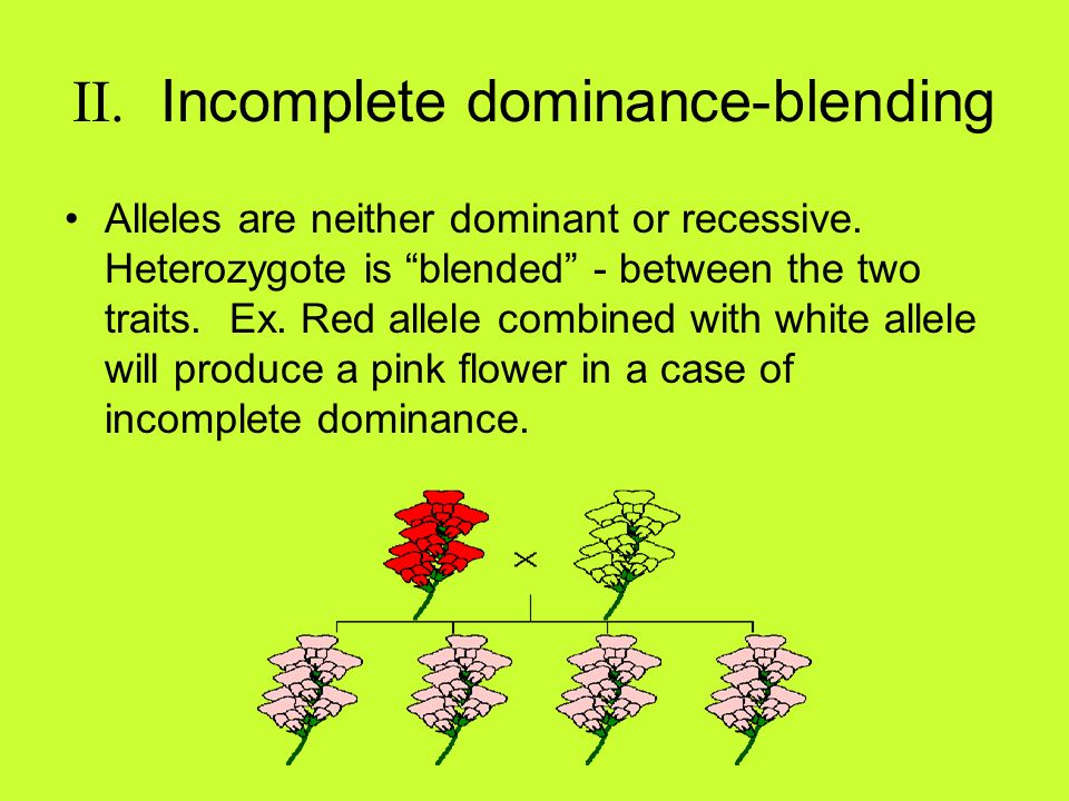 II. Incomplete dominance-blending