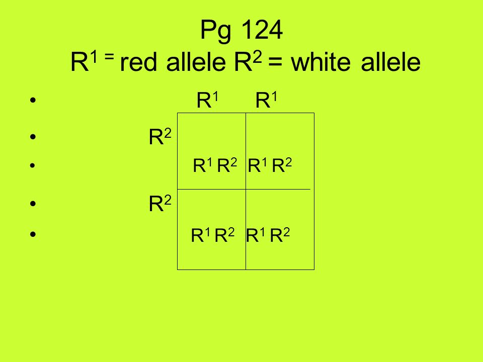 Pg 124 R1 = red allele R2 = white allele
