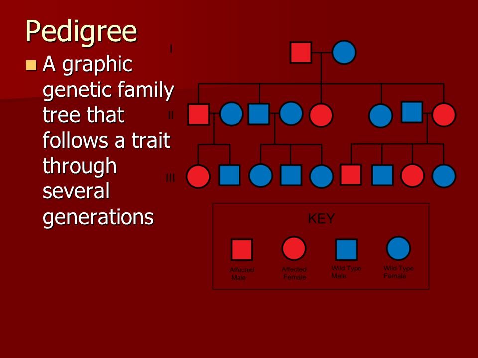 Pedigree A graphic genetic family tree that follows a trait through several generations
