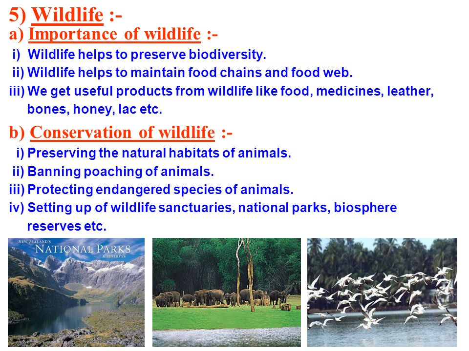 5) Wildlife :- a) Importance of wildlife :-
