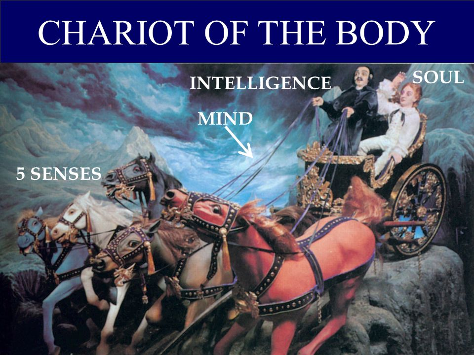 CHARIOT OF THE BODY SOUL INTELLIGENCE MIND 5 SENSES