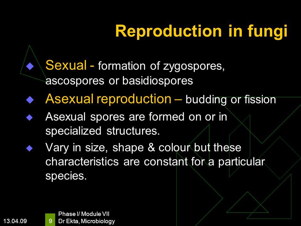 Reproduction in fungi Sexual - formation of zygospores, ascospores or basidiospores. Asexual reproduction – budding or fission.