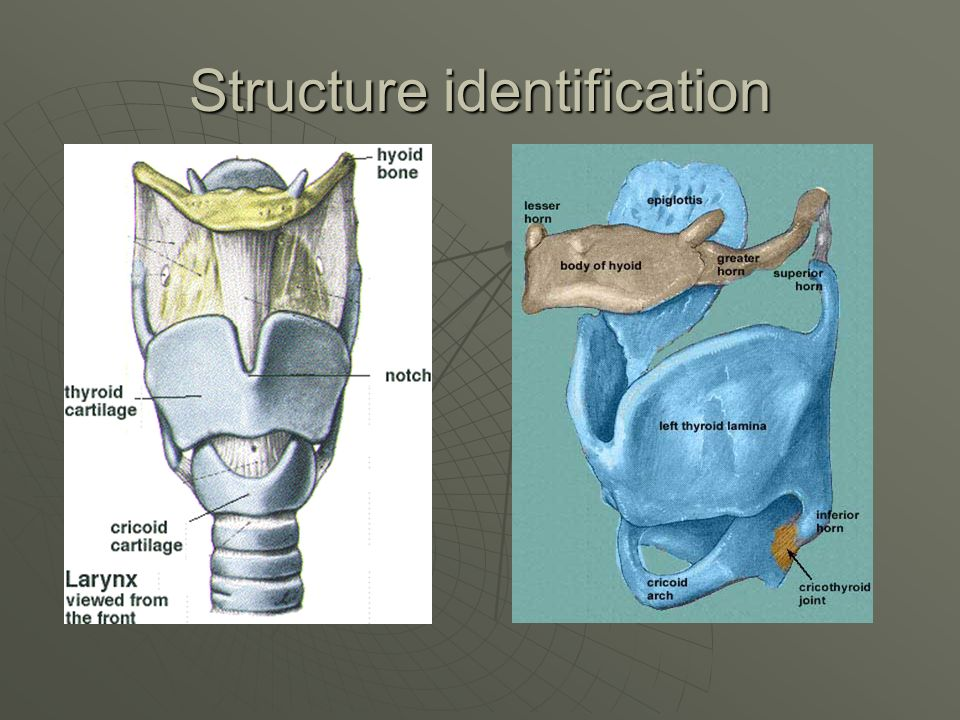 Structure identification