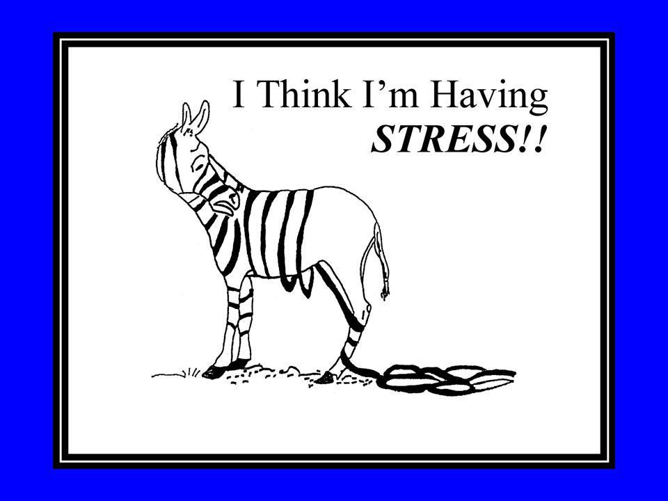 Stressed Zebra