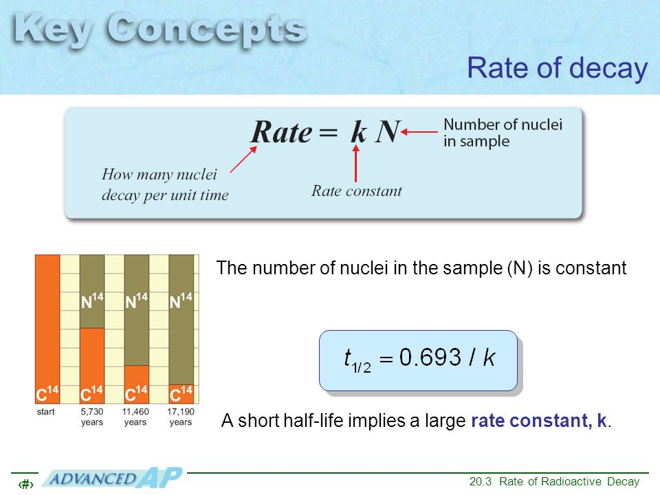 Rate of decay The number of nuclei in the sample (N) is constant