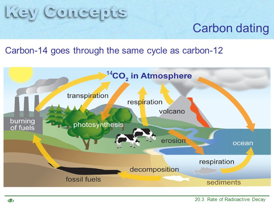 Carbon dating Carbon-14 goes through the same cycle as carbon-12 14