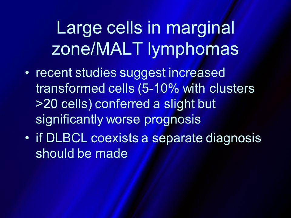 Large cells in marginal zone/MALT lymphomas
