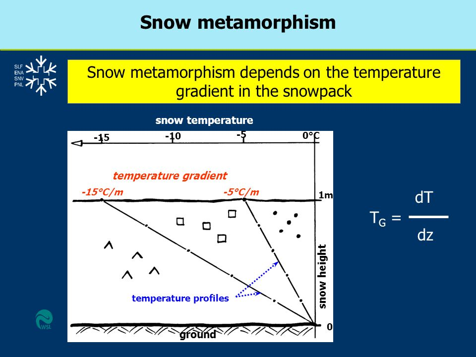 Snow metamorphism depends on the temperature gradient in the snowpack