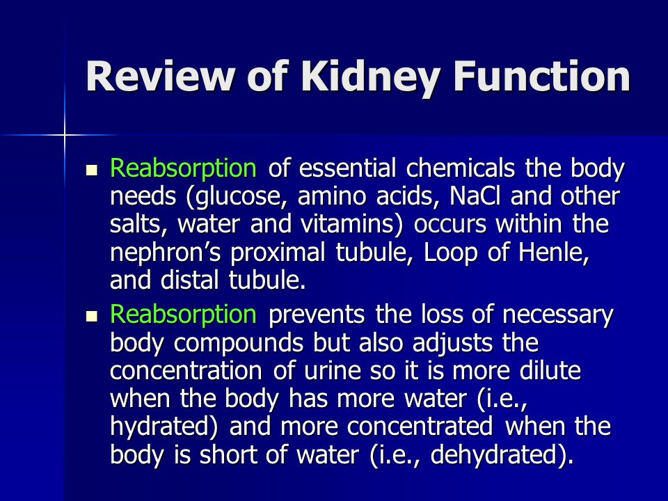 Review of Kidney Function