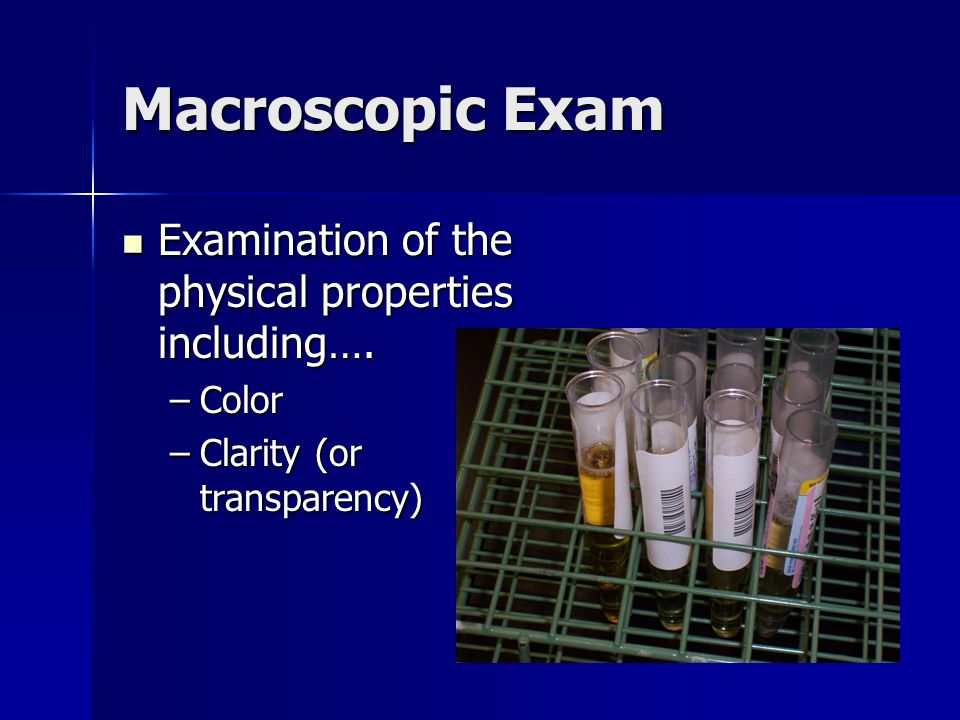 Macroscopic Exam Examination of the physical properties including….