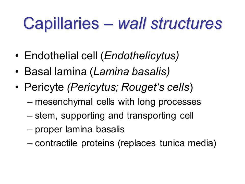 Capillaries – wall structures