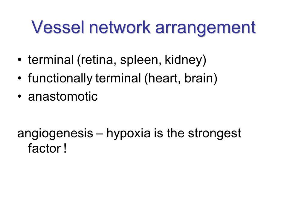 Vessel network arrangement