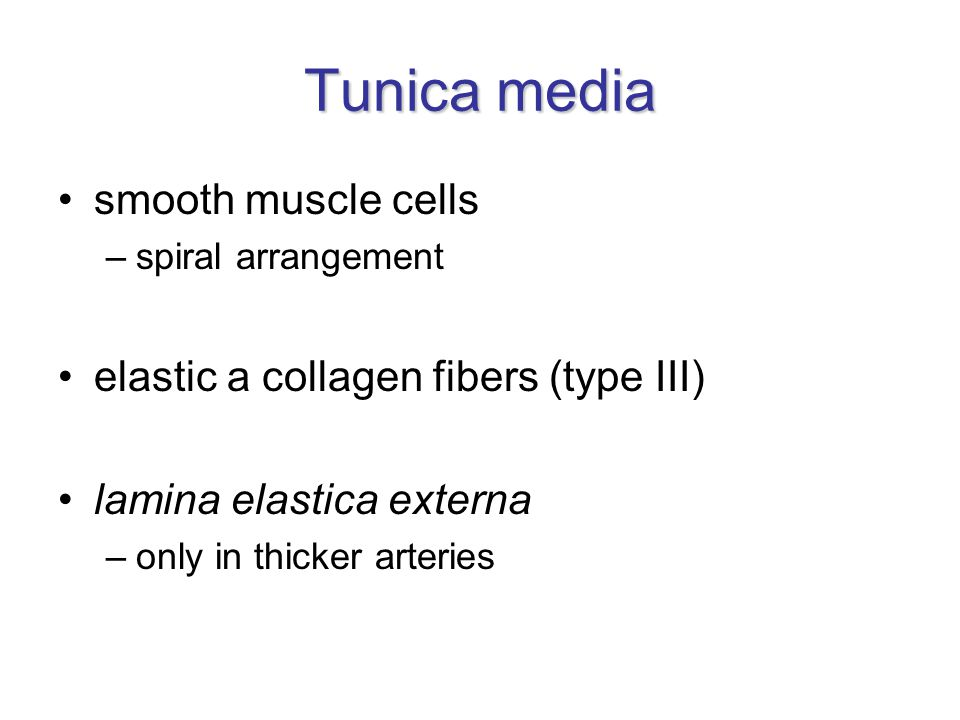 Tunica media smooth muscle cells elastic a collagen fibers (type III)