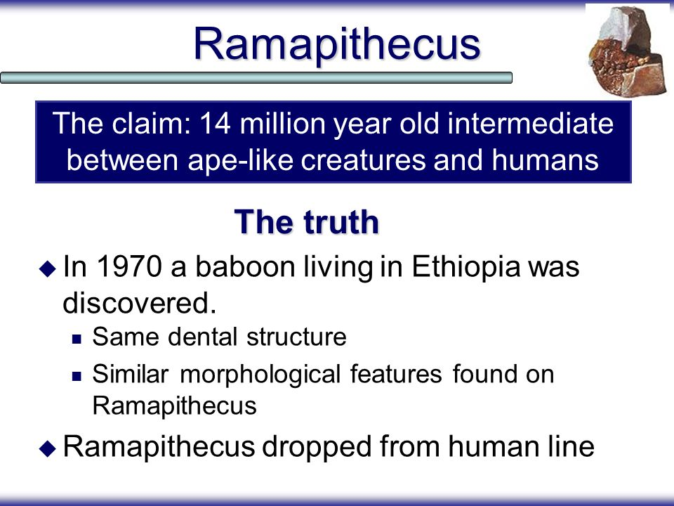 Ramapithecus The truth